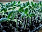 Условия, необходимые для роста и развития растений.
