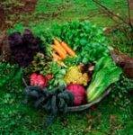 Что сеять и сажать на огороде?