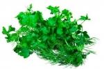 Лучшие скороспелые сорта зеленных культур и выращивание их в парниках и на обогреваемом грунте под пленкой