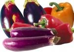 Выращивание перцев и баклажанов